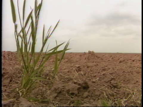 Story on Louisiana Agriculture in 1982