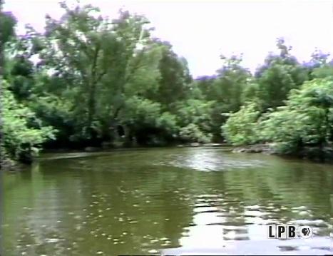 Atchafalaya Basin Boat Tour