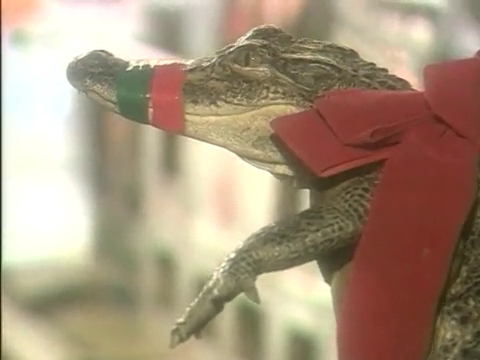 Christmas Alligator