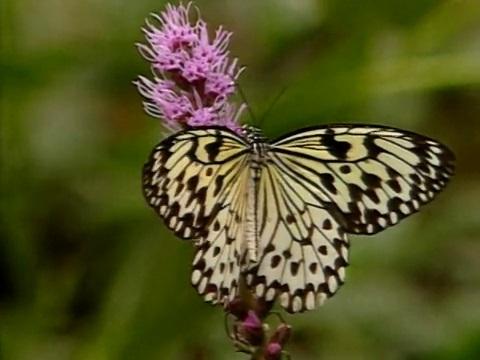 An Enchantment of Butterflies