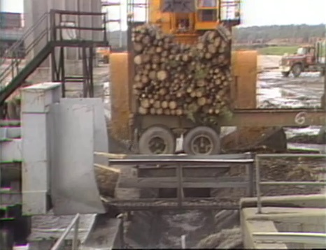 Louisiana's Timber Industry in 1984